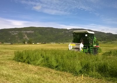 Cutting the experimental plots with a Haldrup harvester