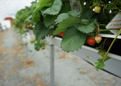 berry tunnel
